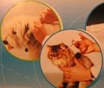 ООО «Клиника мелких животных «Зебра» - Электронная система идентификации животных