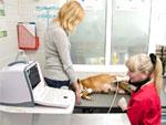 ООО «Клиника мелких животных «Зебра» - Ультразвуковая диагностика
