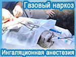 Газовый наркоз (ингаляционная анестезия). ООО «Клиника мелких животных «Зебра»