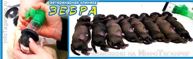 Реанимация новорожденных. ООО «Клиника мелких животных «Зебра»