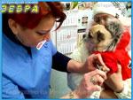 ООО «Клиника мелких животных «Зебра»