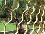 «Автолайн» ИП Белебехова О.О. - Экскурсии в Ростовский зоопарк