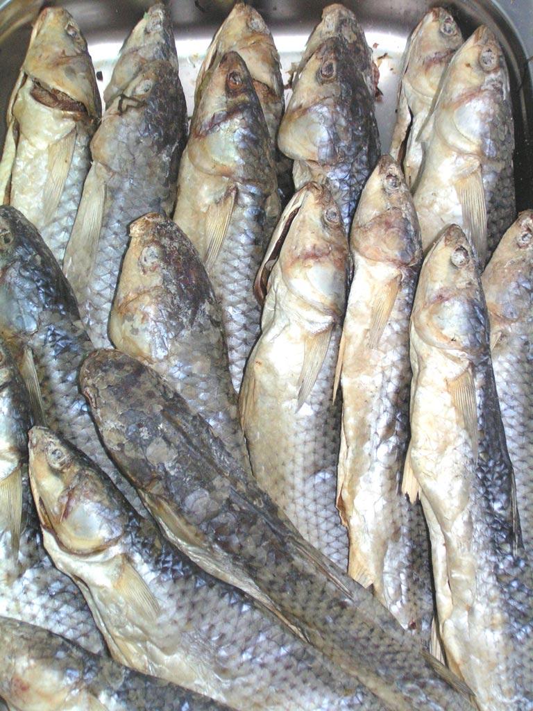Рыба голец - рецепты соления: быстрый, пряный и традиционный