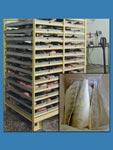 Рыба и рыбопродукция оптом от производителя. Рыба и рыбопродукция от производителя ООО «Альфа-Миус-2»