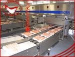 Производство. Яйцо куриное от производителя