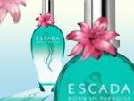 Escada Born In Paradise для нее. Парфюмерия и косметика, сеть фирменных магазинов «Светлана»