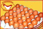 Яйцо С1. Яйцо куриное от производителя Птицефабрика Таганрогская