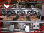 Производство. Яйцо куриное от производителя Птицефабрика Таганрогская