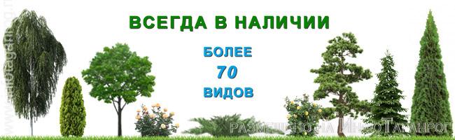 Продажа деревьев в Таганроге. Таганрогский питомник растений