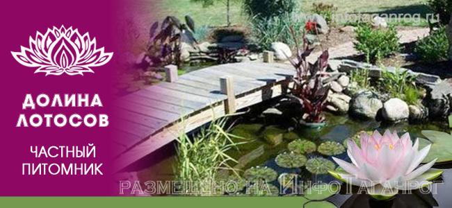 Водные растения для пруда из питомника